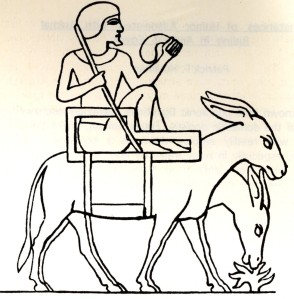 Donkeys were domesticated and in the service of man long before horses. This image from an Egyptian 5th dynasty tomb shows a man seated in an unusual carrying chair placed across the back of two donkeys. Image after John Gardiner Wilkinson from Patrick Houlihan's monograph on instances of humour in riding scenes from ancient Egypt, published by Gottinger Miszellen.