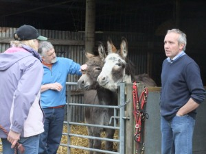 Not just about horses: The Donkey Sanctuary at St Boswells in the Borders opened its doors to the public for the Borders Festival of the Horse.